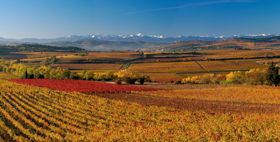 RSE Vin : à Limoux, Il Y A Protect Planet ®
