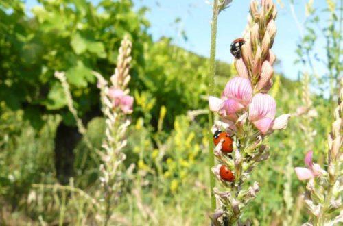 La Biodiversité Au Service De La Viticulture