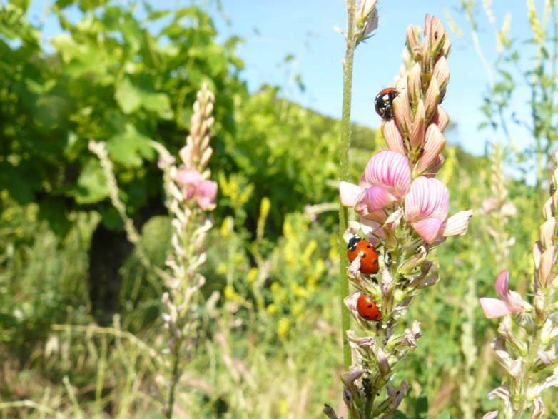 Biodiversité Dans Les Vignes