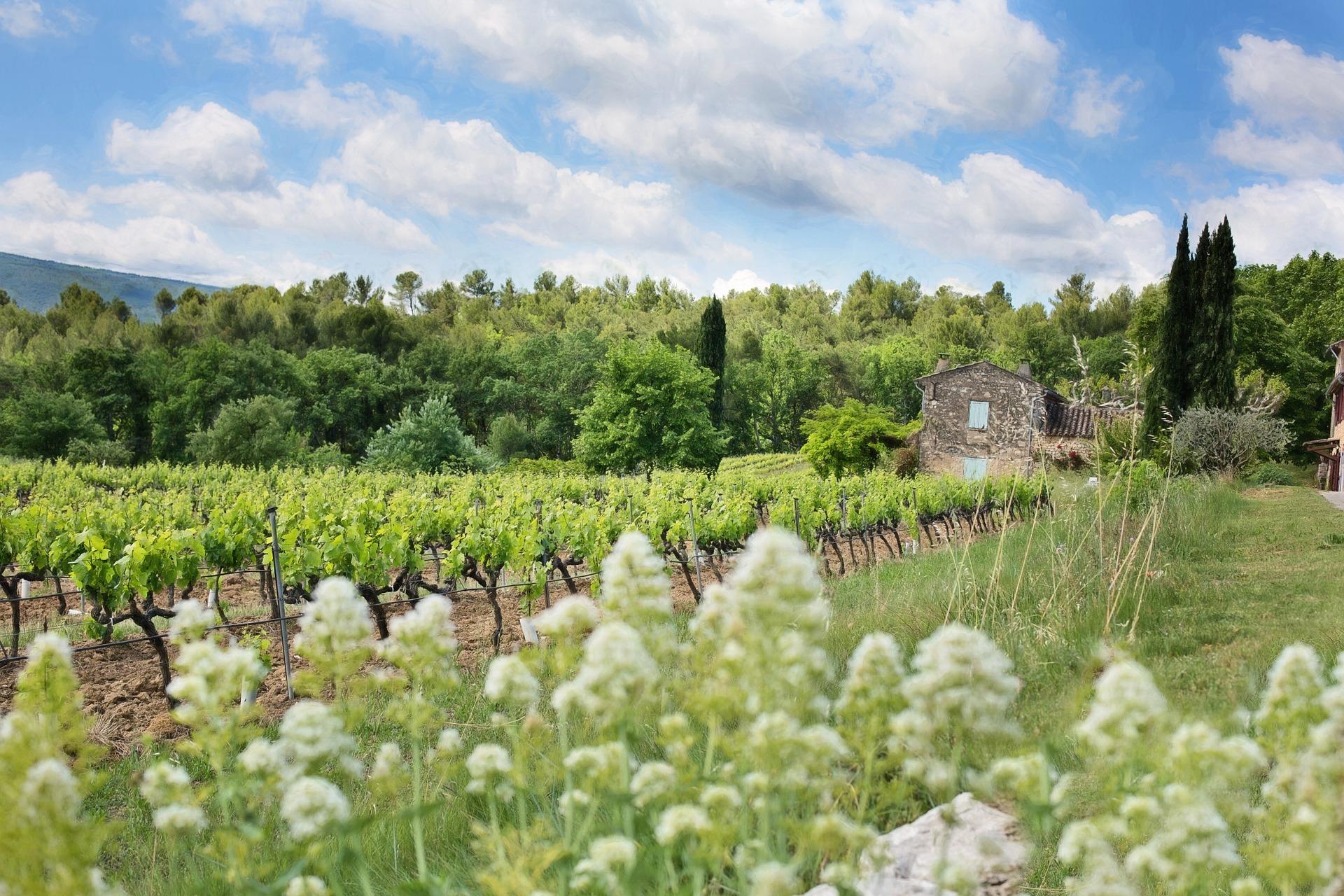 Vignes Et Biodiversité