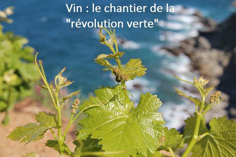 Vin, la révolution verte